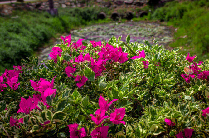 Top 10 Shade Shrubs for Lawns