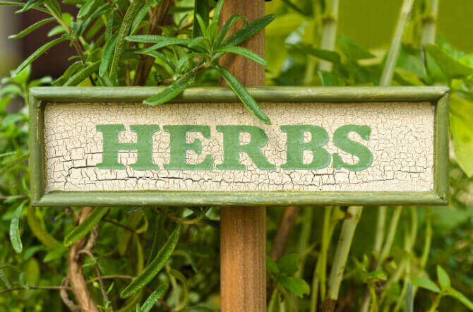 Top 6 Herbs for Companion Organic Gardening