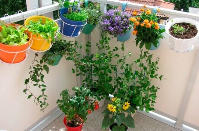 Vegetable Gardening in the City