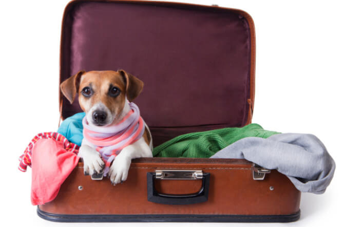 Tips for Airline Travel with Pets