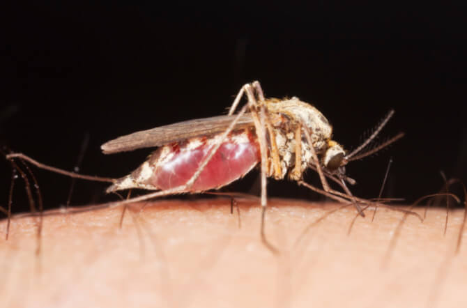 Tips on How to Get Rid of Mosquitoes