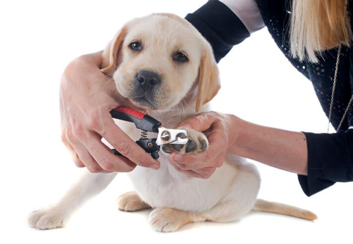 Pets At Home Dog Nail Clipping