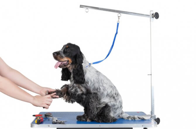 Dog grooming table