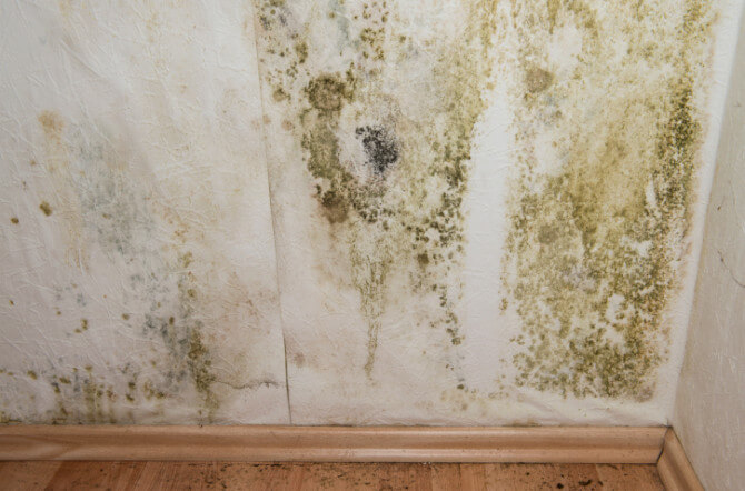 Can You Paint Over Mildew?