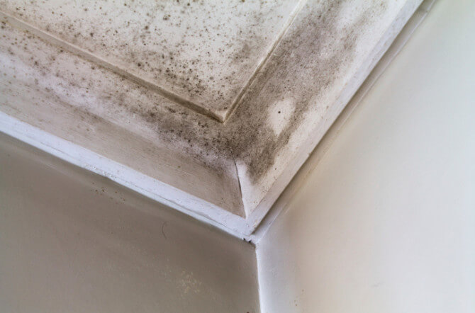 How to Get Rid of Water Damage Odor