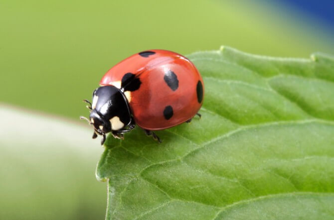 Top 10 Beneficial Insects For The Garden