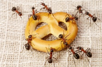 Top 10 Ways to Get Rid of Ants