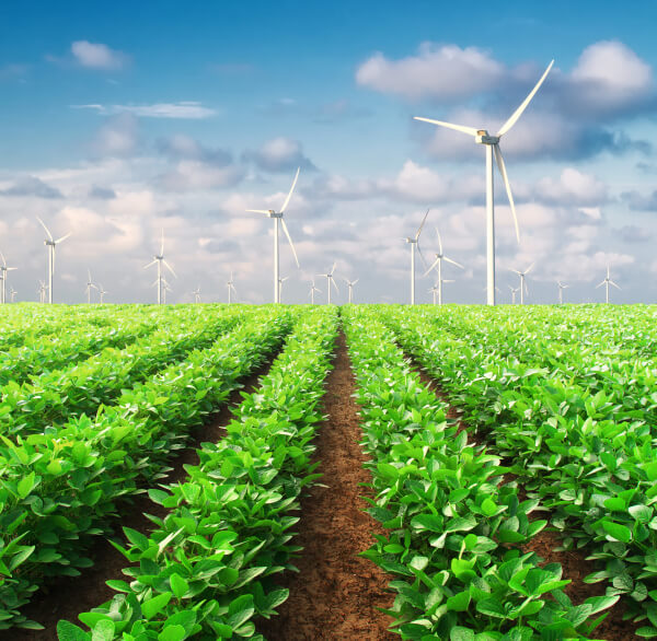 What Does Renewable Mean?