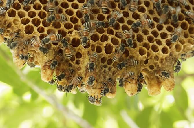large bee hive