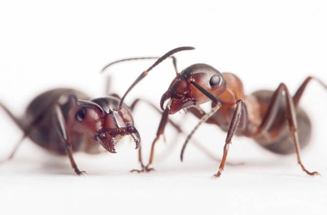 ants on white background