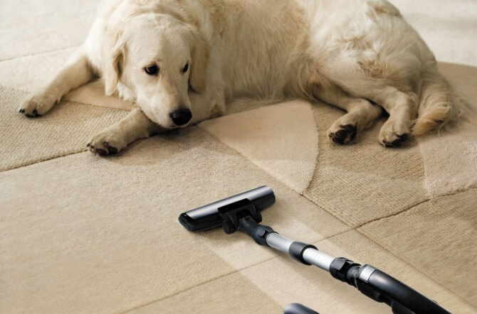 Dog sitting next to carpet cleaner