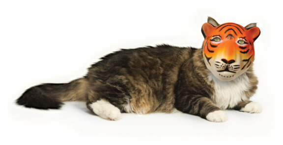 cat wearing tiger mask