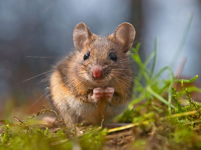 up-close mouse