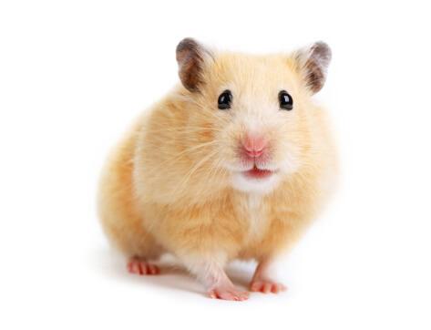 Understanding Hamster Behavior