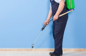 When Do I Need Professional Pest Control Services?