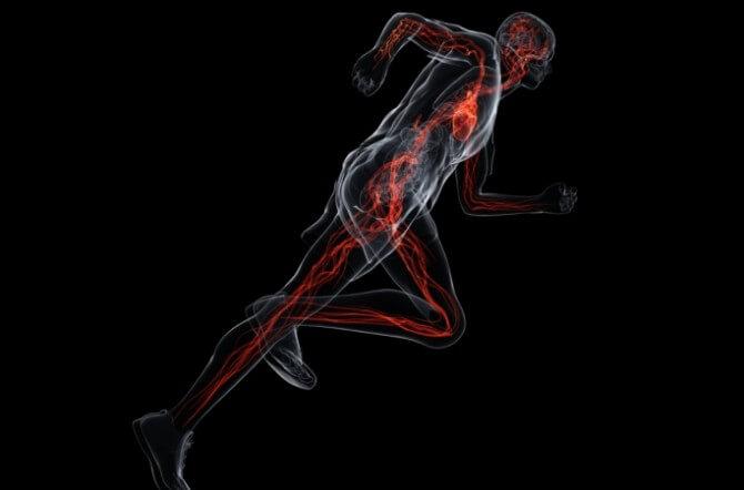 running - vascular system