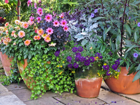 6 Simple Ways to Spruce up Your Landscape - Container Gardening