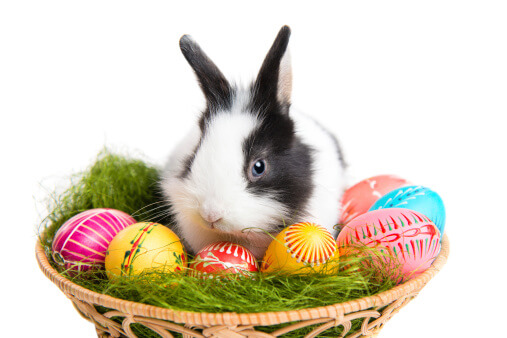 Bunnies to Jelly Beans--History behind Easter Symbols
