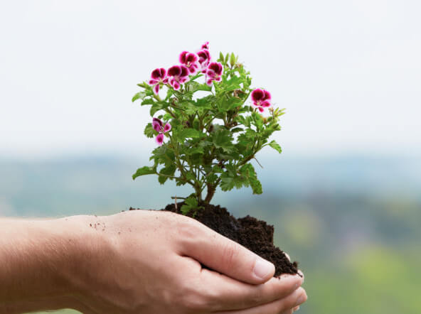 who does what? Hire the Right Landscape Pro