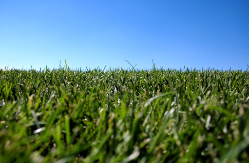 Best Lawn Grass for the Denver Area