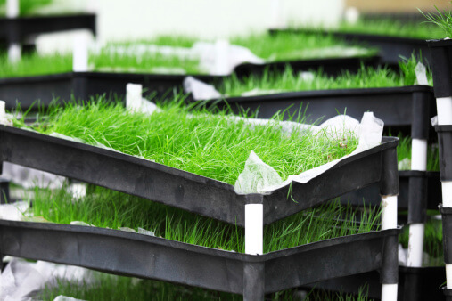 Best Lawn Grass for the Phoenix Area