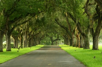 Best Lawn Grass for the Tampa-St. Petersburg Area