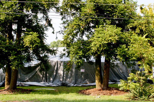 Five Reasons to Choose Organic Tent Fumigation