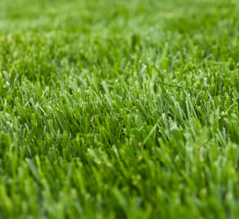 conserve water with the right turf fescue