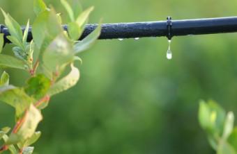 Garden Smarter: 6 Savvy Ways to Save Water