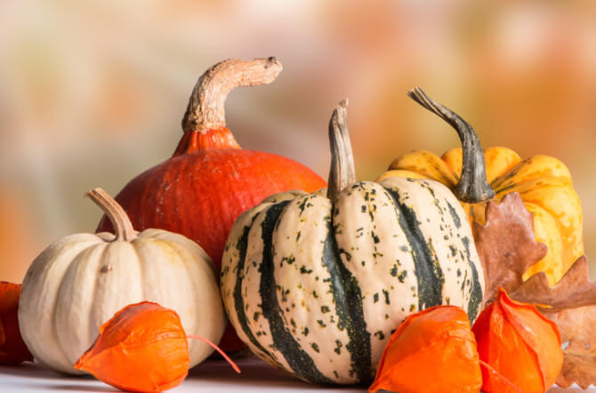 Carving, Cooking or Decorating - Pick the Perfect Pumpkin